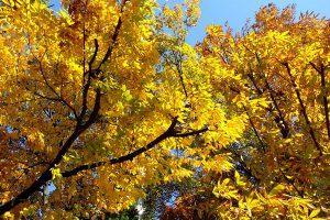 水原の紅葉