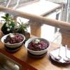 仁寺洞の韓屋カフェで小豆コーヒーピンス.