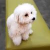 韓国→日本へ ペットの渡航をラクに手続きしたいならこの動物病院^^  ~アイラブペ